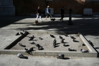 https://www.we-have-iuav.com/files/gimgs/th-68_68_pigeons-in-the-square.jpg
